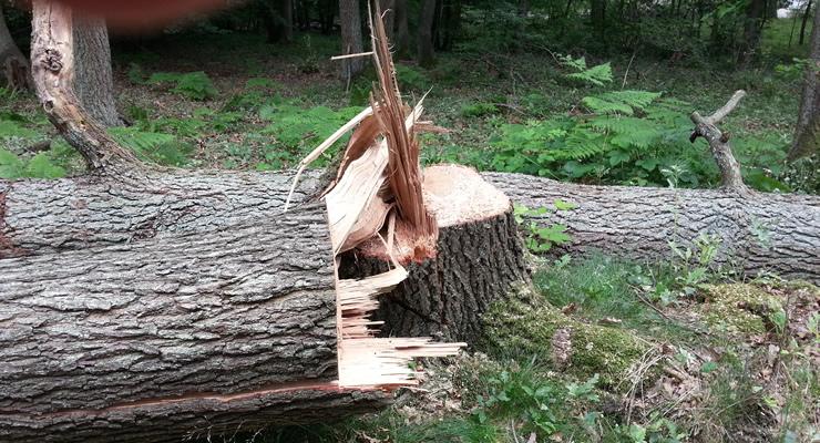 Bevor Sie Baume Fallen Einen Blick Ins Gesetz Werfen